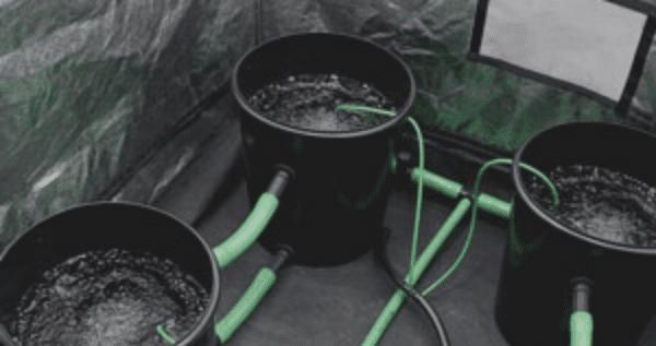 Bubble Buckets for marijuana growing
