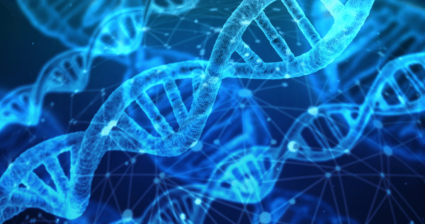 DNA marijuana