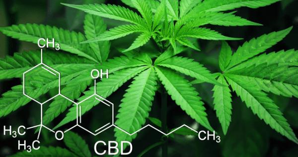 Nutrients for marijuana plants