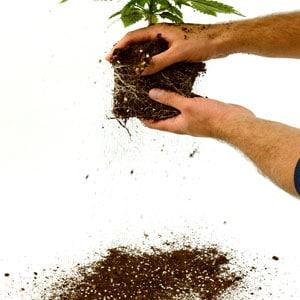 Measure soil step 1