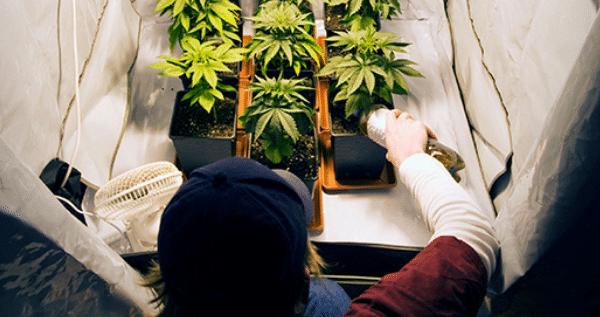 requirements of marijuana grow room