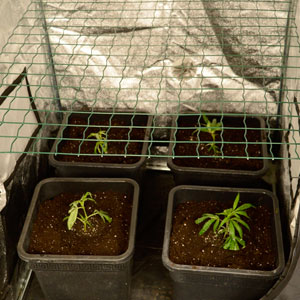 Scrog place screen and adjust