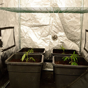 Scrog place screen double checking