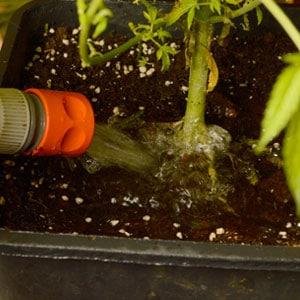 Watering pot plant soil