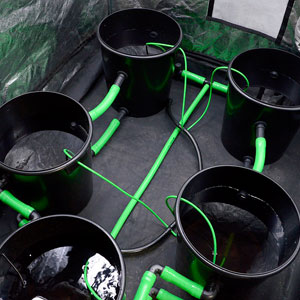5 Bucket with water