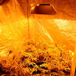 26 days bubble buckets light on