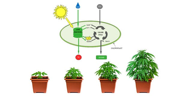 CO2 and growth