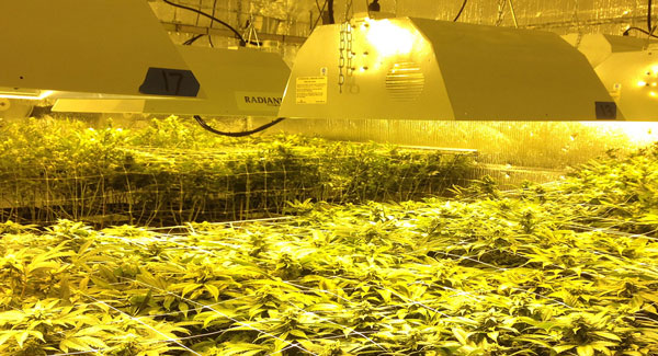Temperature in your grow room