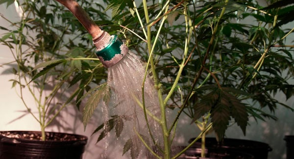 Humidity during watering