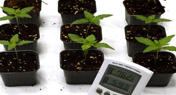 Marijuana temperature