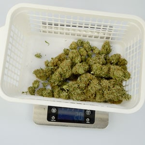 Trimming 2 ounces from marijuana plant