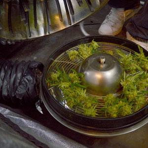 Tumble marijuana step 10