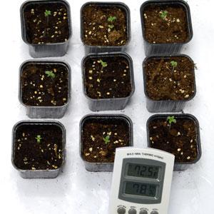 1 day seedling