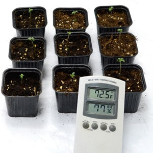 1 day seedling getting the temperature