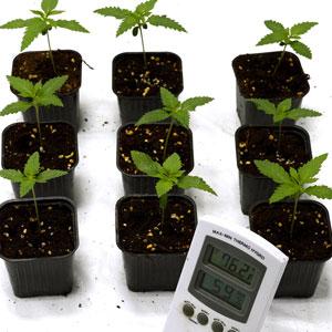 10 days seedling measure temperature