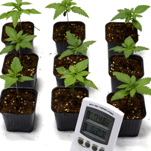 12 days seedling measure the temperature