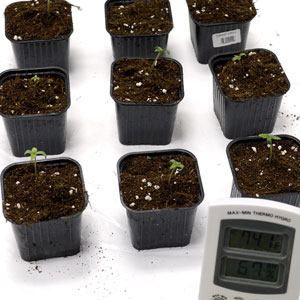 3 days seedling measure the temperature