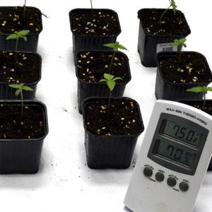 5 days seedling measure temperature