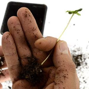 5 days seedling take from soil