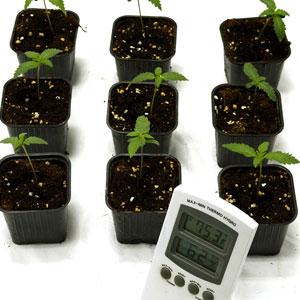 8 days seedling measure temperature