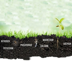 Absorption nutrients in the soil