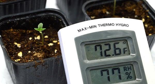 Create a good climate for marijuana seedling