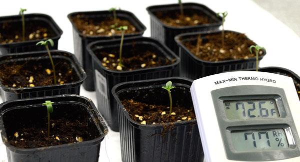 Let them marijuana grow