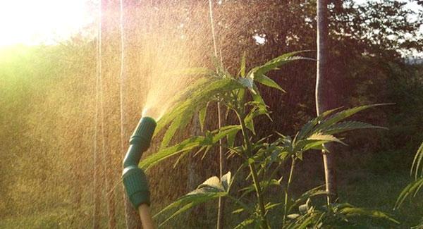 Watering outdoor plants