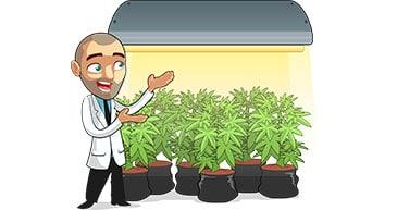 marijuana climate