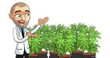 marijuana grow skills