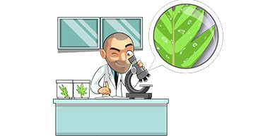 marijuana plant biology