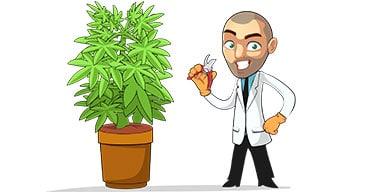 marijuana plant care