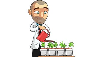 watering marijuana plants