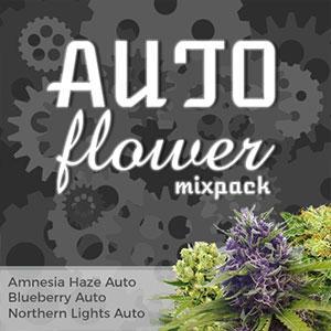 autoflower marijuana seeds variety pack