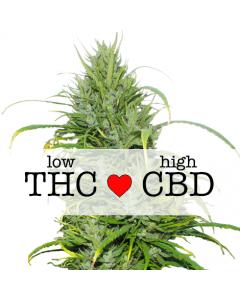 Carma CBD Marijuana Seeds