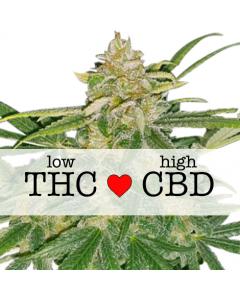 Critical Mass CBD Feminized cannabis seeds