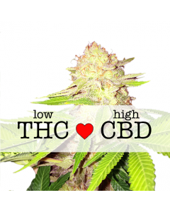 Strawberry Cough CBD Feminized Marijuana Seeds