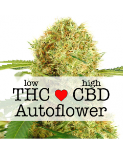 White Widow CBD Autoflower Marijuana Seeds