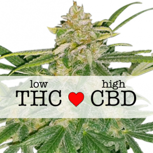Critical Mass CBD Feminized cannabis seeds