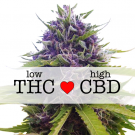 Blueberry CBD Autoflower Marijuana Seeds