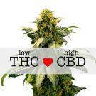 Harlequin feminized marijuana seeds