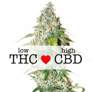 OG Kush CBD Feminized cannabis seeds