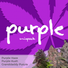 Purple Mix Pack Seed Variety Pack