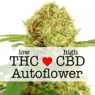 White Widow CBD Autoflower Marijuana Seeds