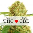 White Widow CBD Feminized Marijuana Seeds