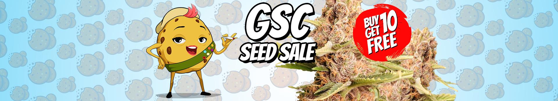 GDP Purple marijuana seed sale large