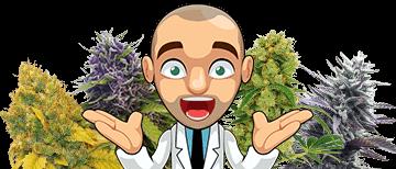 marijuana seed variety packs