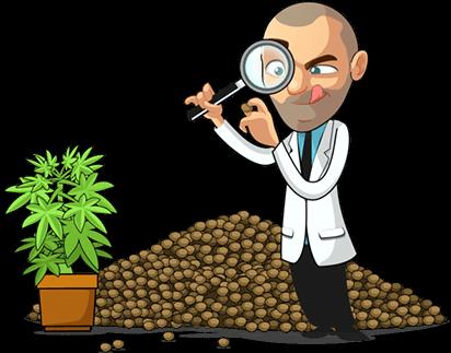 bergman inspecting pot seeds